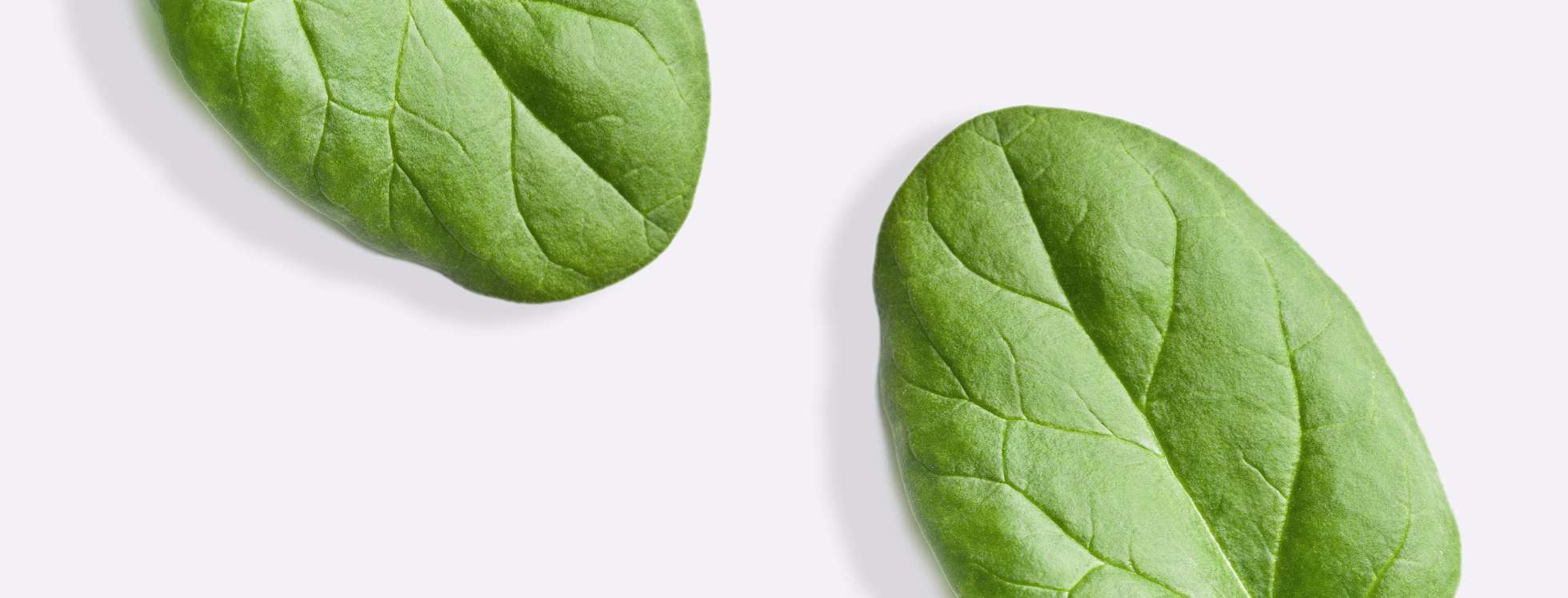 Spinach leaves on grey background